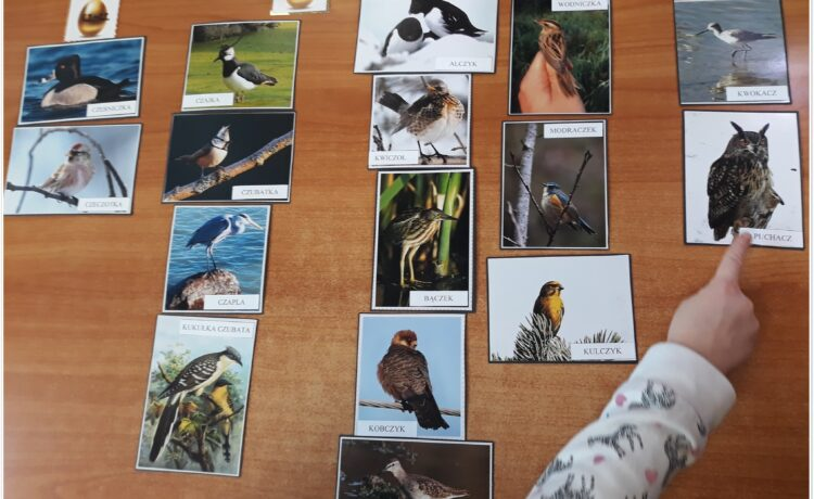 Logopeda – ornitolog.