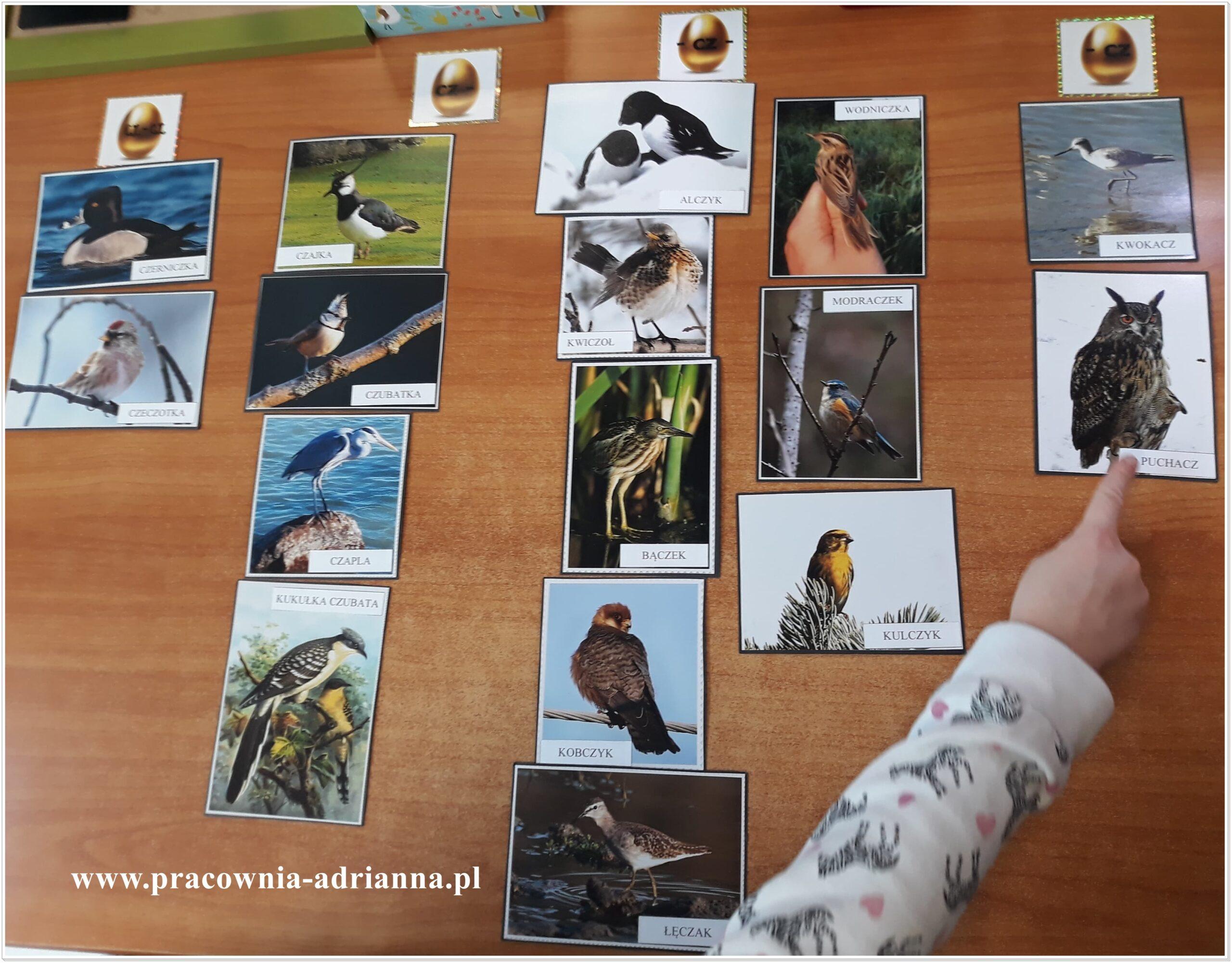 Pomoc wymyślona 6 lat temu, ale nadal w użyciu i nadal bardzo lubiana przez dzieci. Może dlatego, że ma prawdziwe zdęcia prawdziwych ptaków? Pomoc prosta – 15 ilustracji z ptakami, małe etykiety naklejone, duże etykiety do dopasowywania. Cztery ilustracje – złote jajo.Moje ptaki to zdjęcia, odbite w zakładzie fotograficznym, podklejone kartonem. Nie laminowałam bo mi […]